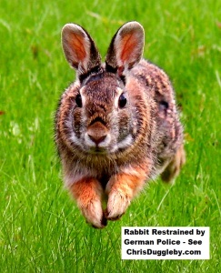 p1-rabbit-restrained-by-german-police-see-17-feb-2017-blog-at-chrisdugglebydotcom