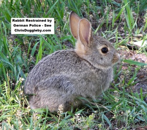p2-rabbit-restrained-by-german-police-see-17-feb-2017-blog-at-chrisdugglebydotcom