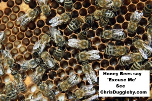 p5-honey-bees-say-excuse-me-see-17-feb-2017-blog-at-chrisdugglebydotcom