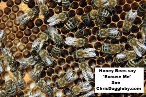 p5-honey-bees-say-excuse-me-see-17-feb-2017-blog-at-chrisdugglebydotcom