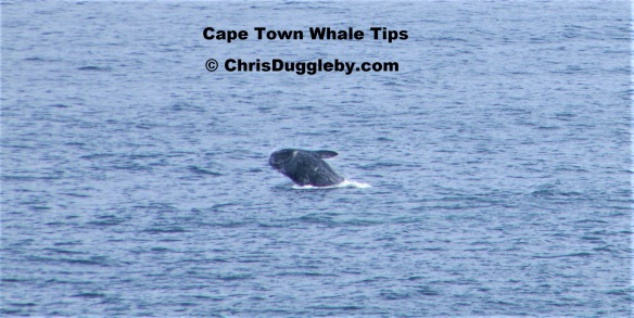 2012 Whale Picture 2 Taken at Llandudno Cape Town