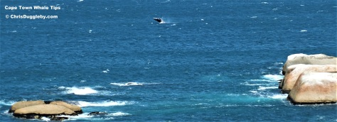 2014 Pic of Wilf the whale taken from Sunset Rocks