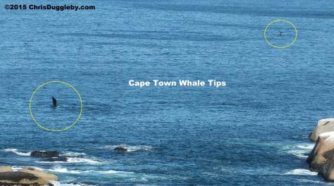 Feb 28th 2015 Whale Pic 2