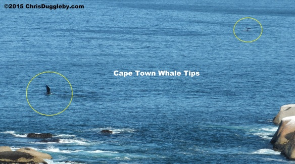 Feb 28th 2015 Whale Pic 2