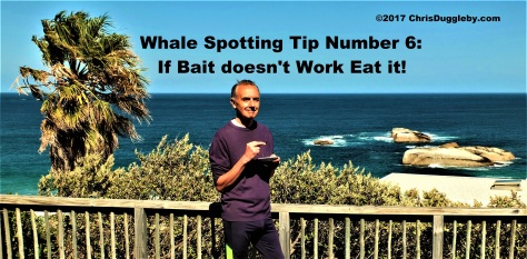 22-see-cape-town-whale-spotting-tips-from-blog-at-chrisdugglebydotcom-dscf2640-4