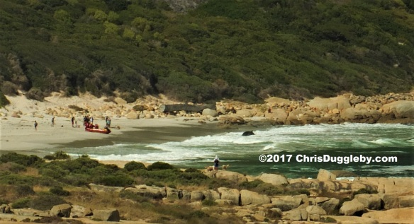 2017 5th March 0820 Cape Town time Whale stranded on Sandy Bay beach