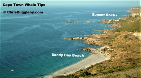 Avoid Built up areas and provide the whales with entertainment like the Sandy Bay gay nudist beach