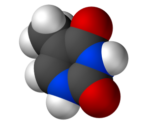 DAN Base Thymine (the 'T' in the code TAC which signals for amino acid Tyrosine to be put into a protein)